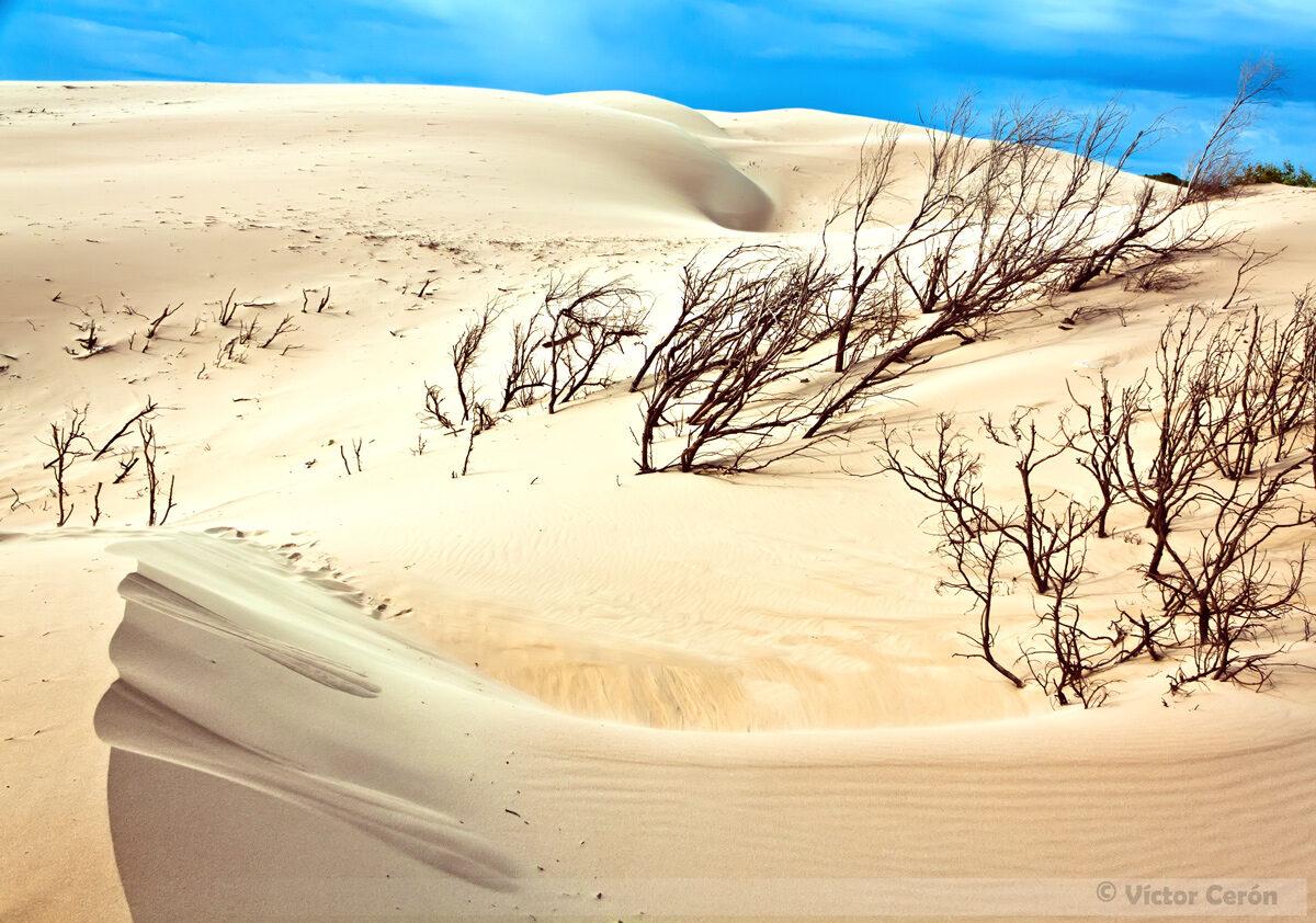 Naturaleza muerta - PN El Estrecho
